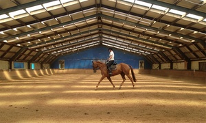 Wellington Indoor Riding School: Horse Riding: One ($39) or Five Private or Group Lessons ($149) at Wellington Indoor Riding School (Up to $350 Value)