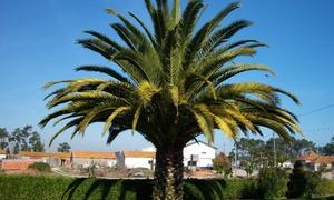 Lot 3 Palmiers + Fertilisant