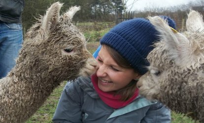 image for 90-Minute Walk with Alpacas and Drink for One or Two at Charnwood Forest (Up to 50% Off)
