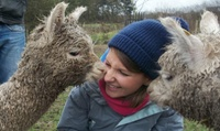 90-Minute Walk with Alpacas and Drink for One or Two at Charnwood Forest (Up to 50% Off)