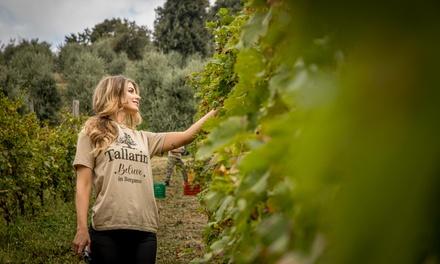 Visita alle cantine Brugherata con degustazione vini, salumi e formaggi e bottiglia in cassa personalizzata