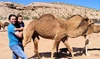 Camel Safari: Camel Encounter and Segway Tour for One or Two at Camel Safari (Up to 44% Off)