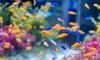 Diploma in Aquarium and Fish Care