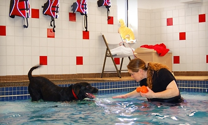 Boston Red Dog Pet Resort and Spa - Boston: $30 for a 30-Minute Doggie Swim With a Daycare or Overnight Stay at Boston Red Dog Pet Resort & Spa (Up to $81 Value)