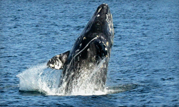 Dana Wharf Sportfishing & Whale Watching - Dana Point: Whale-Watching Trip for Two or Four from Dana Wharf Sportfishing & Whale Watching in Dana Point (Up to 55% Off)
