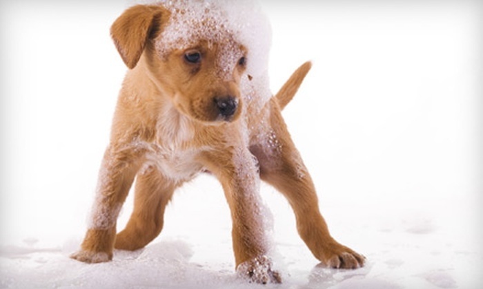 Paws Veterinary Clinic - Springfield MO: $20 for Pet Grooming at Paws Veterinary Clinic (Up to $65 Value)