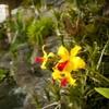 Denver Botanic Gardens – Up to Half Off Admission