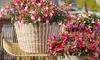 6er-Set Fuchsien Bella mit dekorativen Blüten