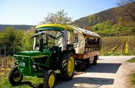 Weinerlebnis: Geführte Weinberg-Tour im Planwagen oder zu Fuß mit Verkostung und Snacks für 1 bis 6 Personen mit Weinerlebnis