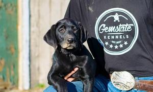 Gem State Kennels: $20 for $40 Worth of Services — Gem State Kennels