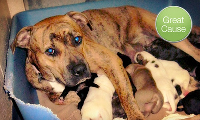 Mended Hearts Indy - Indianapolis: $10 Donation to Treat Neglected Dogs
