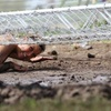 Up to 46% Off a Obstacle-Course Mud Run