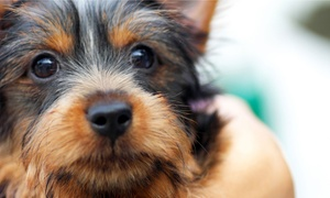 Vanity Pups: Nail Trims or Bath, Brush, and Nail Trim Package at Vanity Pups (Up to 70% Off). Four Options Available.