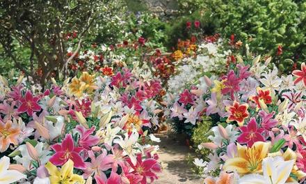 Summer Colour Bulb Collection