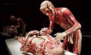 """Körperwelten Aachen - Eine Herzenssache: 2 Tickets für die Ausstellung """"Körperwelten"""" am Termin nach Wahl im Aachener Event Center (34% sparen)"""