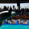 Miami Seaquarium – Up to 41% Off All-Day Pass