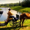 Up to 55% Off Horse and Carriage Excursions in Red Deer