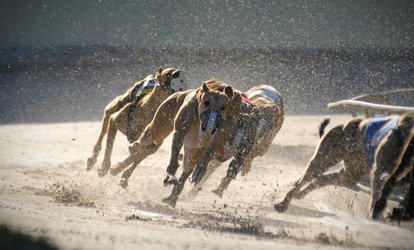 Greyhound Race Night with Meal and Drink for Four or Six at Harlow Greyhound Stadium (Up to 66% Off)