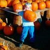 $10 for Halloween Fun at Reindeer Farm in Palmer