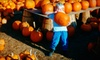 Reindeer Farm - Palmer: Outing for Two to Halloween Fun or Haunted Hay Maze at Reindeer Farm in Palmer