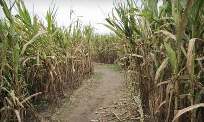 Hubb's Corn Maze - Clinton: $8 for an All-Day Corn-Maze Pass for Two to Hubb's Corn Maze in Clinton ($16 Value)
