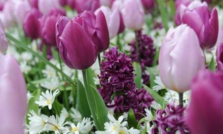 Mix van hyacinten en anemonen