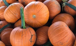 Up to 30% Off Activity Wristbands at Cullipher Pumpkin Patch at Cullipher Pumpkin Patch, plus 6.0% Cash Back from Ebates.
