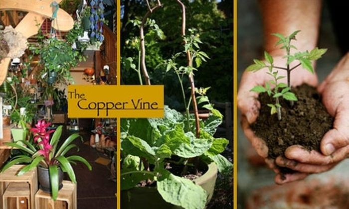 The Copper Vine - Broadway: $10 for $25 Worth of Plants, Flowers, and Garden Supplies at The Copper Vine