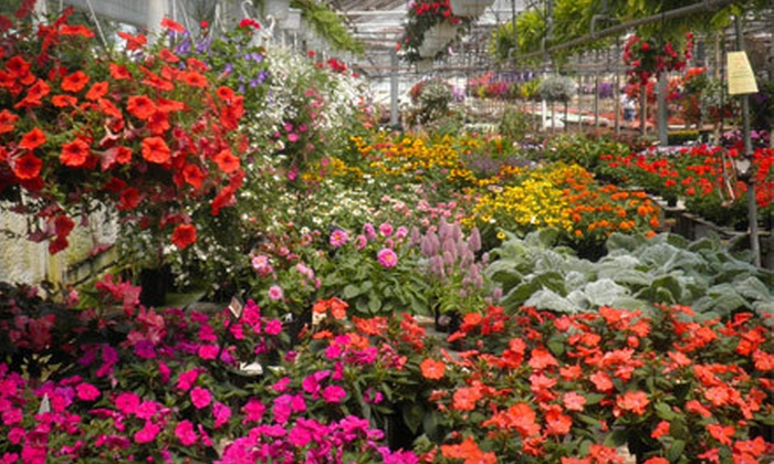 Barrow Greenhouse - Mellwood: $10 for $20 Worth of Garden Plants at Barrow Greenhouse