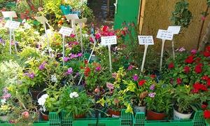 משתלה מהלב: רק 30 ₪ על גרופון בשווי 60 למימוש על: פרחים עונתיים, פרחים רב שנתיים, צמחי תבלין ועוד במשתלה מהלב, משתלה שיקומית בי-ם