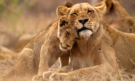 12-Day South Africa Tour w/ Air from Gate 1 Travel. Price per Person Based on Double Occupancy (Buy 1 Voucher/Person). 1557a423-0e4c-4ff0-9f83-86e769a351b6