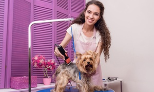Toelettatura del cane - Vizual Coaching: Videocorso sulle tecniche di toelettatura del cane con Vizual Coaching (sconto 91%)
