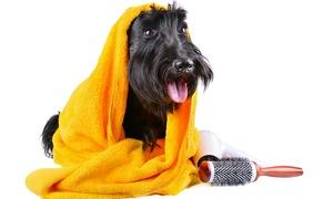 4 Zampe: Fino a 3 toelettature per cani o buono sconto fino a 20 €