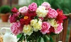 Old Fashioned Fragrant Peonies Mixed Bareroots (5-Pack)