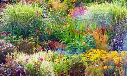 5 or 10 Perennial Border Plants
