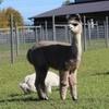Up to 49%  Off Alpaca Farm Tour