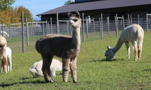 Up to 60%  Off Alpaca Farm Tour at Alpacas At Marquam Hill Ranch, plus 6.0% Cash Back from Ebates.