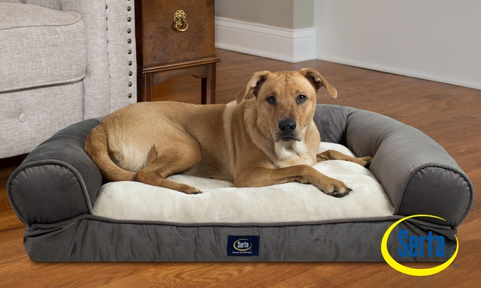 Groovy Serta Extra Plush Bolster Dog Bed Groupon Uwap Interior Chair Design Uwaporg
