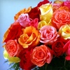 51% Off at Kremp Florist in Willow Grove