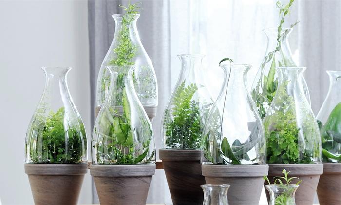 4 luftreinigende farn pflanzen groupon goods. Black Bedroom Furniture Sets. Home Design Ideas