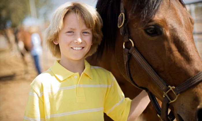 Black Star Sport Horses - Rockwall: One, Three, or Five 60-Minute Horse-Riding Lessons at Black Star Sport Horses in Rockwall (Up to 63% Off)