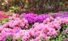 Pianta di Rhododendron