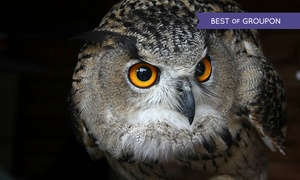 Walworth Castle Birds of Prey: Walworth Castle Birds of Prey: Tour and Falconry Display For Two (£9) or Family of Four (£16)