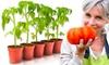 Semillas de tomate gigante