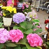 $10 for Plants at Plant Farm in Spokane Valley