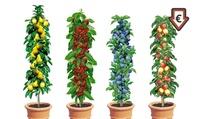 4er, 8er oder 12er-Set Säulenobst Apfel, Birne, Kirsche und Pflaume
