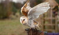 Evening with Owls for One, Two or Family of Four at Falconry Experience (Up to 56% Off)
