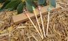 Bastoncillos de bambú para los oídos