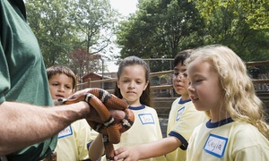 VIADUCT SANCTUARY AND PETTING ZOO: One-Hour Petting Zoo Party Experience at Viaduct Sanctuary and Petting Zoo (40% Off)