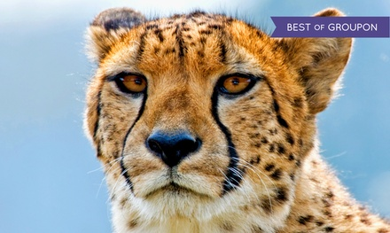 Visit for a Child or Adult to Wildlife World Zoo & Aquarium (Up to 10% Off)